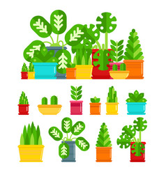 Set of house plants colourful plants isolated vector