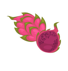 Pitaya whole and half isolated on white ripe vector