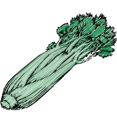 Celery vector image vector image