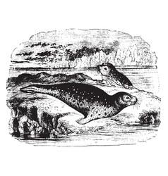 Common seal vintage vector