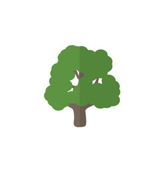 Isolated park flat icon decoration tree vector