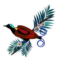 Wilson s bird-of-paradise in brown color isolated vector