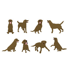 Animal dog labrador character icon set in flat vector