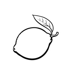 whole shiny ripe lime with a leaf vector image