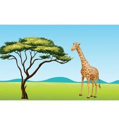 Giraffe by a tree vector