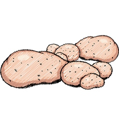 Potatoes vector image vector image