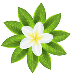 Beautiful white tropical flower vector image
