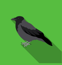 crow icon in flate style isolated on white vector image vector image