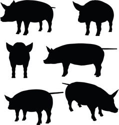pig collection silhouette vector image