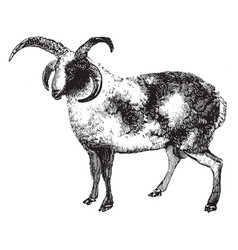 Ram vintage vector