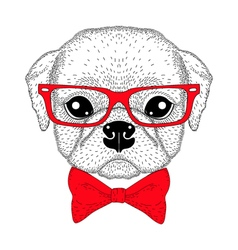 Cute pug boy portrait with bow tie hipster glasses vector