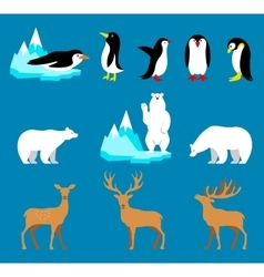 Set arctic and antarctic animals penguin vector