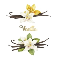 Watercolor vanilla vignettes vector