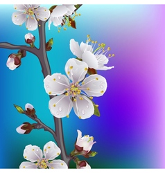 flower apricot vector image vector image