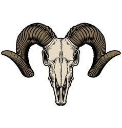 goat skull vector image vector image