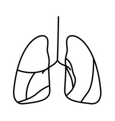 Hand drawing contour respiratory system vector