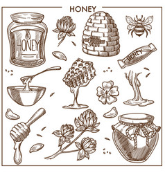 sweet honey from apiary isolated cartoon vector image vector image