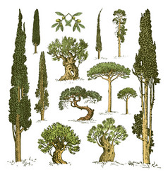 big set of engraved hand drawn tree include pine vector image