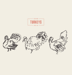 set turkeys drawn sketch vector image