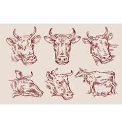 Hand drawn sketch set cow and bull vector