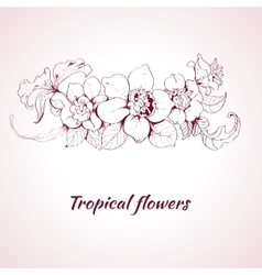 Tropical flower sketch vector image