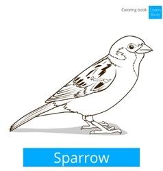 Sparrow learn birds educational game vector