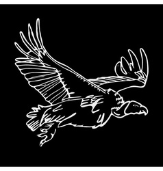 Hand-drawn pencil graphics african vulture hawk vector