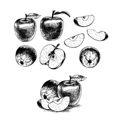 Hand drawn set of apples sketch vector image vector image