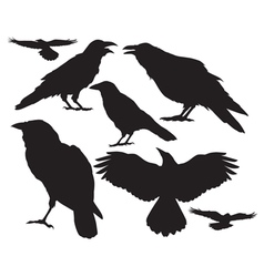 raven silhouette vector image vector image