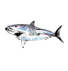 Colored hand drawing of a shark vector