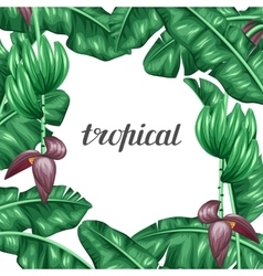 Background with banana leaves Decorative image of vector image vector image