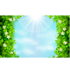 spring and summer branches with fresh green leaves vector image vector image