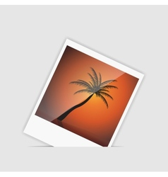 Instant photo with palm tree vector