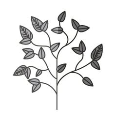Plant with leaves design vector