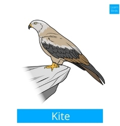 Kite bird learn birds educational game vector