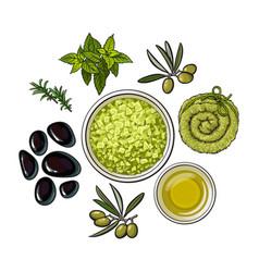 Spa salon accessories - stones massage oil vector