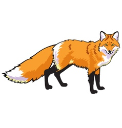 Standing red fox vector