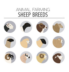 Sheep breed icon set farm animal flat design vector