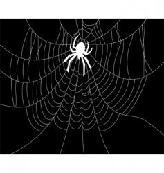 spider and web vector image