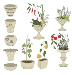 Flower pots with vegetables - herbspepper vector