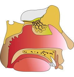 The humans olfactory vector image