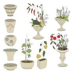 Flower pots with vegetables - herbspepper vector