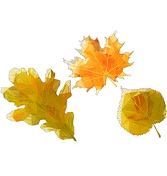 Autumn abstract leaves vector