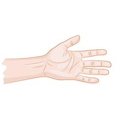 Man hand isolated vector