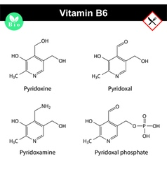 Chemical structures of vitamin b6 forms vector