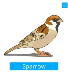 Sparrow learn birds educational game vector
