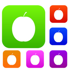 Fresh apricot set collection vector