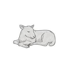 Lamb sleeping drawing vector