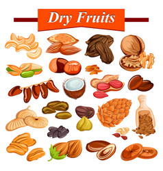 Assorted dry fruit set including cashewnut almond vector