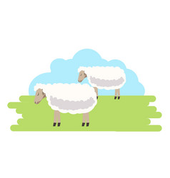 fluffy curly sheeps with clean fur on green field vector image